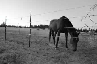 Horse grazing on Washington farm